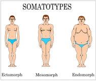 Somatiskt royaltyfri illustrationer