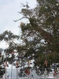 Somawathiya Royalty-vrije Stock Foto