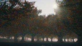 Somber de herfstbos met mist stock videobeelden