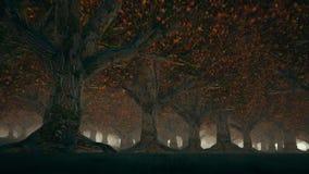 Somber de herfstbos met mist stock footage