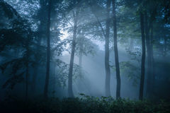 Somber die bos met schemerig licht wordt gevuld Stock Foto's