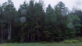 Somber en donker bos stock video