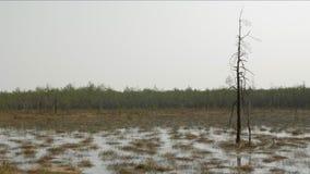 Somber landschap Vernietigde boom in water stock videobeelden