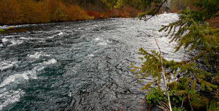 Somber Tones. Metolius River near Camp Sherman, OR Royalty Free Stock Photos