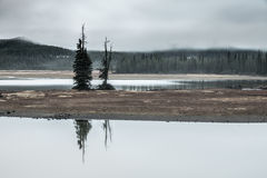 Somber Trees. 90 second early morning exposure Foggy and misty morning at Sparks Lake in the Cascade Mountains of Oregon Stock Photos