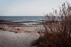 Somber zeegezicht met voorgrondonkruid royalty-vrije stock foto