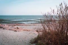 Somber zeegezicht met voorgrondonkruid stock foto's