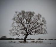 Sombere boom Stock Afbeeldingen