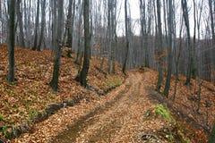 Sombere bosweg in de recente herfst Royalty-vrije Stock Afbeeldingen