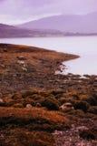 Sombere kustlijn royalty-vrije stock foto