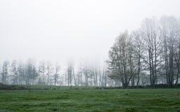 Sombere ochtend op een weide Stock Fotografie
