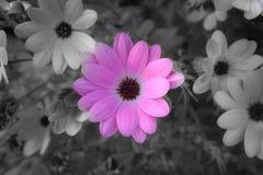 Sombere roze bloem royalty-vrije stock fotografie