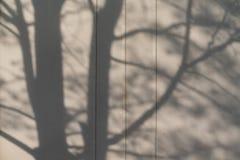 Sombra abstracta del fondo de las ramas de árbol en superficie de metal gris fotografía de archivo