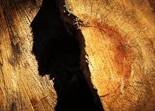 Sombra abstracta en el tocón viejo fotos de archivo