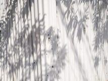 Sombra blanca acanalada del fondo y de las hojas Imagenes de archivo