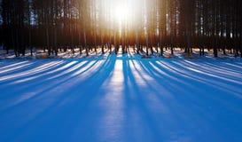 Sombra con el bosque profundo Fotografía de archivo libre de regalías
