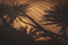 Sombra da árvore fotografia de stock