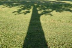 Sombra da árvore Imagens de Stock