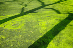 Sombra da árvore Imagem de Stock Royalty Free