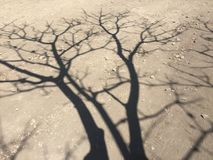 Sombra da árvore Imagens de Stock Royalty Free