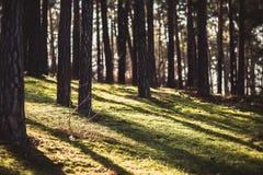 Sombra da árvore com por do sol Foto de Stock