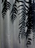 Sombra da árvore do grão de pimenta Fotos de Stock Royalty Free