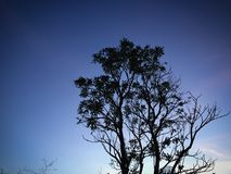 A sombra da árvore na noite Fotos de Stock Royalty Free