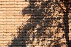 Sombra da árvore na parede de tijolo Fotos de Stock