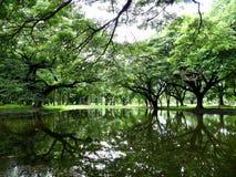 A sombra da árvore refletiu do fundo da água Imagem de Stock