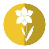 Sombra da estação de mola da flor do narciso ilustração royalty free