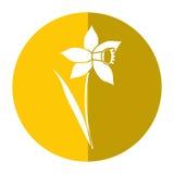 Sombra da flor da folha da flor do narciso amarelo ilustração stock
