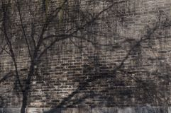 Sombra da mola Imagem de Stock Royalty Free