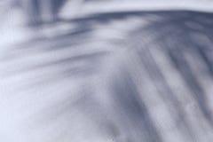 Sombra da palma Fotos de Stock