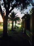 Sombra da palma Imagens de Stock Royalty Free