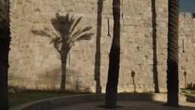 Sombra da palma na parede da cidade velha em jerusalem filme