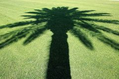Sombra da palmeira Imagem de Stock Royalty Free
