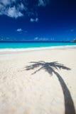 Sombra da palmeira na praia Imagens de Stock