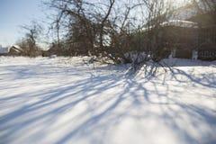 A sombra das árvores no campo de neve no fundo de t Imagem de Stock