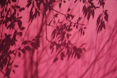 Sombra das filiais em um B cor-de-rosa Foto de Stock Royalty Free