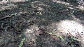 Sombra das folhas das árvores vídeos de arquivo