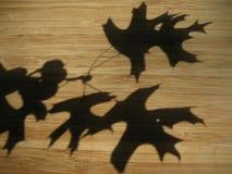 Sombra das folhas da queda no fundo de madeira fotografia de stock royalty free
