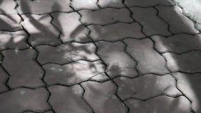 Sombra das folhas vídeos de arquivo