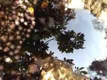 sombra de la belleza Foto de archivo