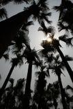 Sombra de la palmera Fotos de archivo