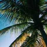 Sombra de la palmera Imágenes de archivo libres de regalías