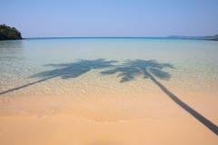 Sombra de la palmera de dos cocos en la playa tropical Fotografía de archivo