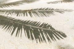 Sombra de la palmera en la arena de la playa tropical fotos de archivo
