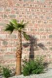 Sombra de la palmera en la pared de piedra vieja, mezquita de Dzhumaya, Plovdiv, Foto de archivo
