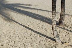 Sombra de la palmera en la playa arenosa Fotografía de archivo libre de regalías