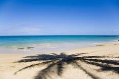 Sombra de la palmera sobre la arena Imagen de archivo